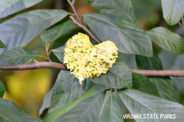 Even the plant-life loves Virginia State Parks