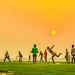 Cricket by Tushar Arnob