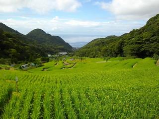 Terraced Rice Fields in Ishibu