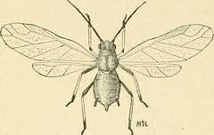"""Image from page 97 of """"Manual of vegetable-garden insects"""" (1918)"""