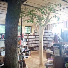 Ce matin, profitant d'un temps peu clément, nous sommes allés dans un arbre chercher des livres