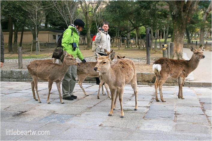 奈良公園-41