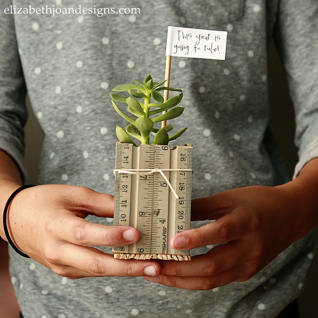 Ruler Succulent Planter 1