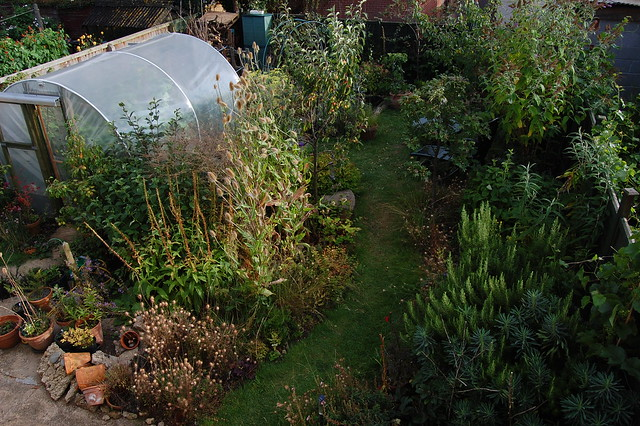 A view of the back garden