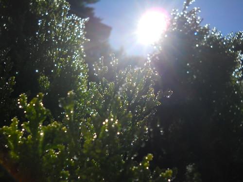 raindrops in the sun