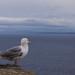 Corsica, Bonifacio ©GregOfPoland