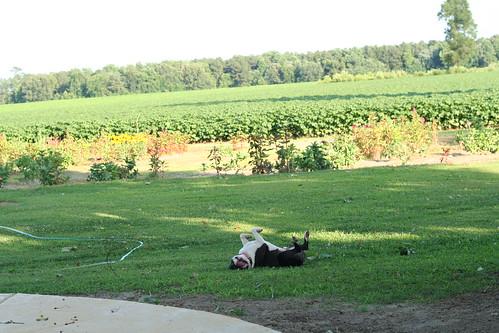 Farm July 14 (47)