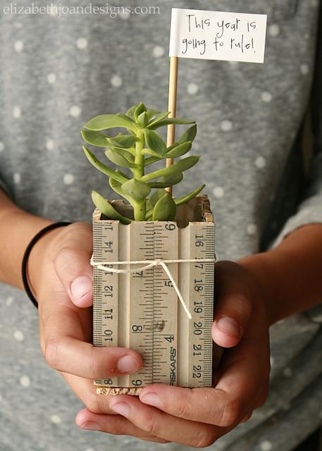 Ruler Succulent Planter 11