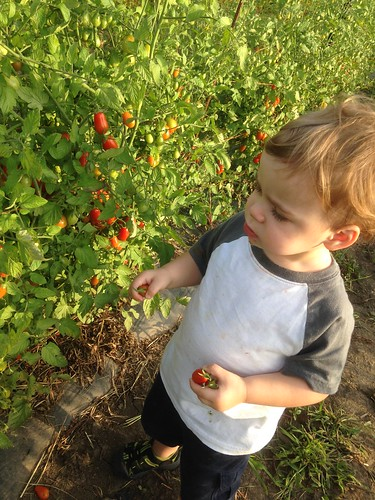 Elliott Picking Tomatoes