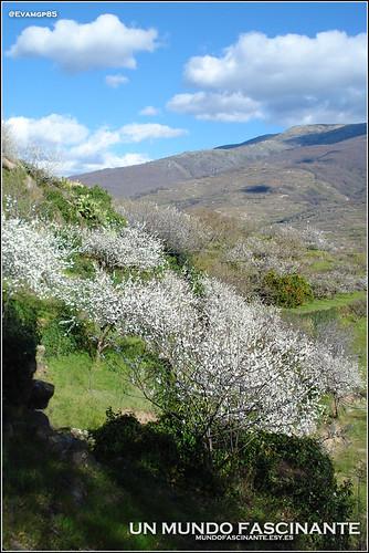 Ruta de las Nogaledas, Valle del Jerte.