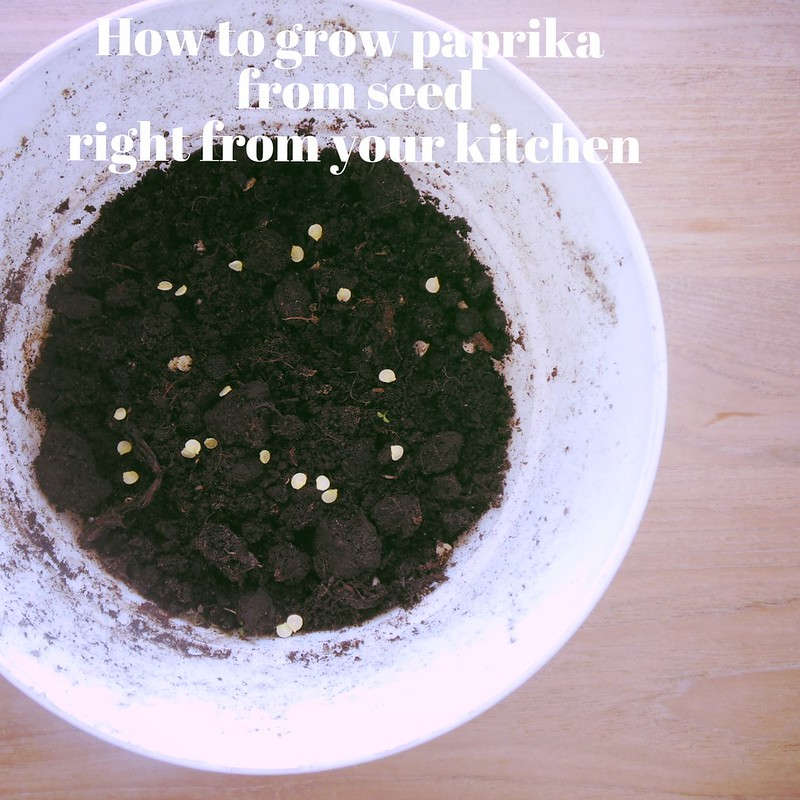 How to grow paprika from seed right from your own kitchen