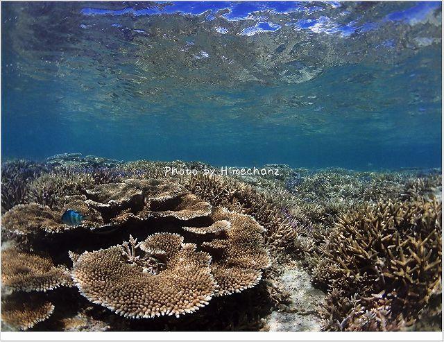 サンゴのある景色!
