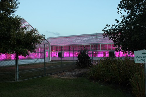 New energy efficient lights in USDA greenhouses at the Western Regional Research Center in Albany (above) will reduce greenhouse gas emissions and save about $200,000 a year in electrical costs. The City of Albany, California recently issued a proclamation recognizing USDA for installing the new LED luminaires and reducing greenhouse gas emissions. Plants in the greenhouses, used for research by Agricultural Research Service scientists, also are growing faster and producing higher yields.