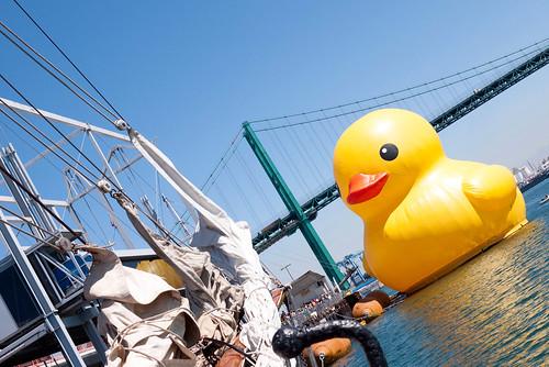 duck17