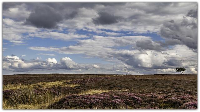 8144 Heather, sky and open moorland