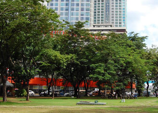 Cebu City trees