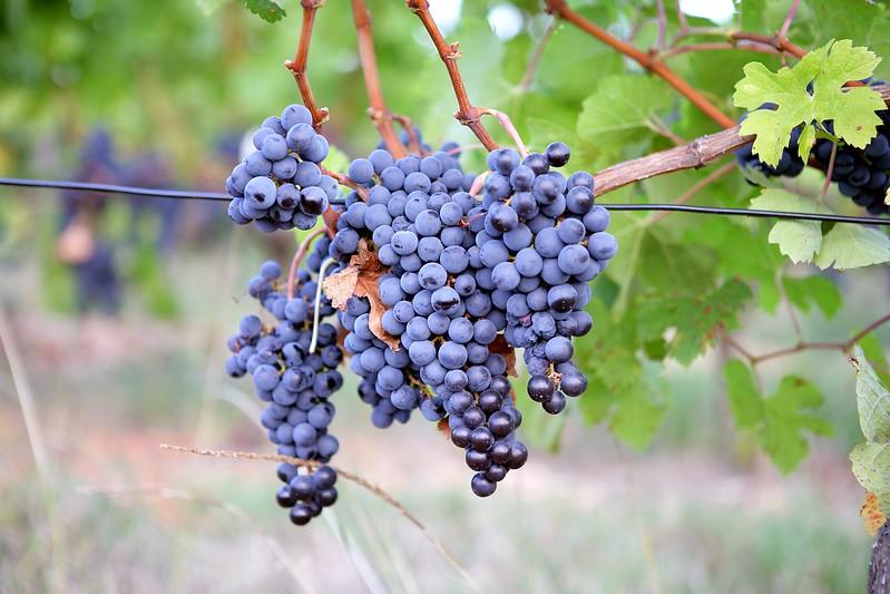 吃葡萄不吐皮才健康 四撇步輕鬆洗葡萄