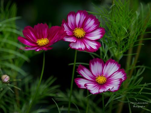 Blüten im Herbst
