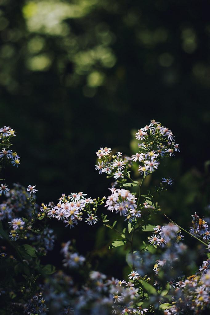 Kisiel-2014-09-07-0060