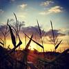 Finally a sunny Sunday :) #Sunday #Sunset