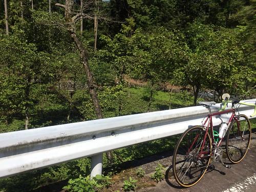 中伊豆〜韮山峠