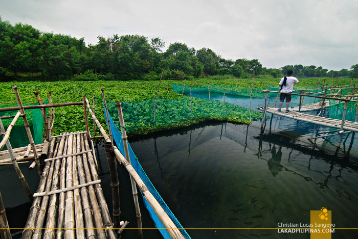 Fishpond at Pinakbet Farm in Caoayan, Ilocos Sur