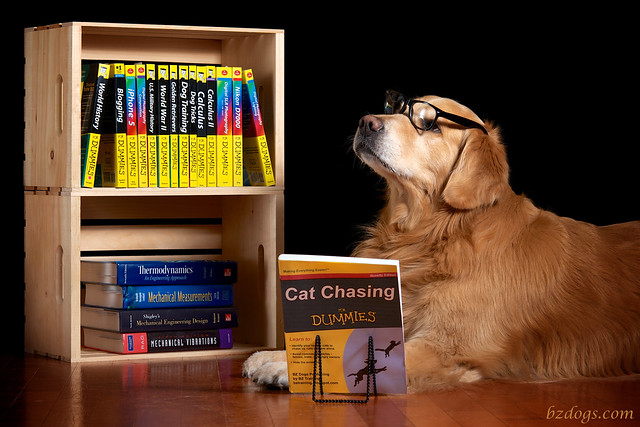 The Educated Dog