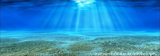phông 3d hồ cá đại dương phong dd-10