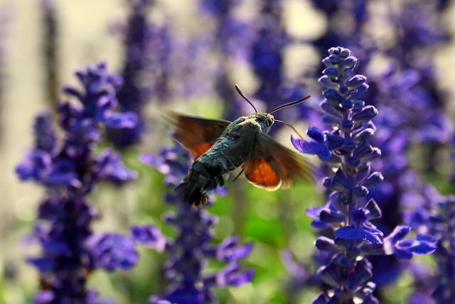 Hummingbirds of the world of butterflies! :) (series)