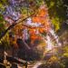 Beautiful Sunny Morning at Ozenji temple, Kanagawa, Japan by aotaro