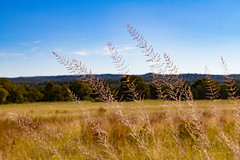 Canyon Wren Ranch - Native Grasses