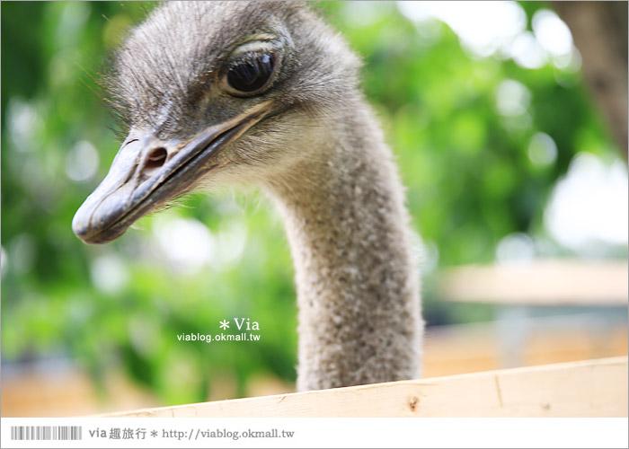 【彰化景點】克林姆莊園Cream Manor~小型動物園!戶外親子同遊好去處39