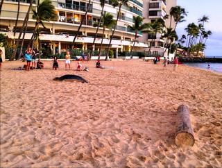 Image of Kaimana beach. ocean usa beach hawaii waikiki oahu kaimana hawaiianmonkseal pacofic