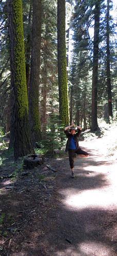 yoga july 2014 sequoia national park