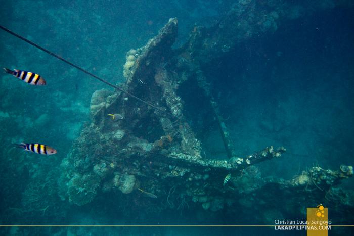 Skeleton Wreck, Coron