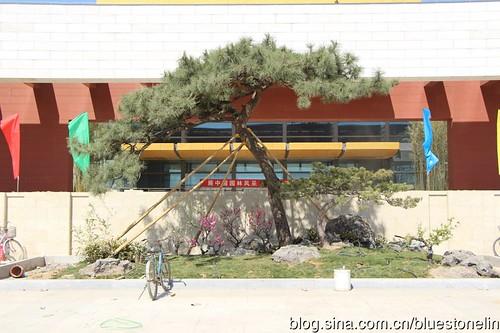 園林博覽會內古樹。(圖片來源:林吉洋)