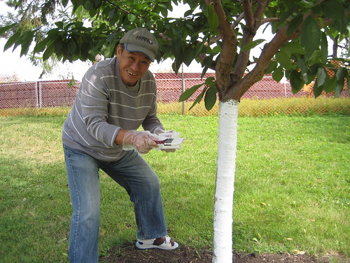 Fruit tree painting in ben nobleman park ben nobleman - White painted tree trunks ...