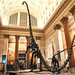 Museum of Natural History - Sleepover for Grownups -  Dinosaurs in the Grand Hall by Vivienne Gucwa