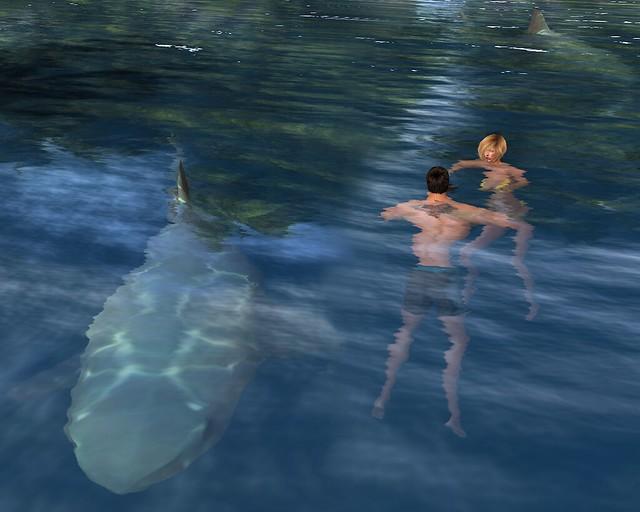 Don Rachel Shark 1200x960