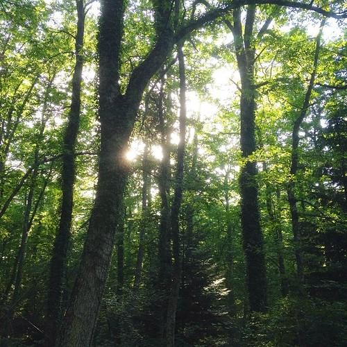 Abetina di Rosello #nature #TagsForLikes #sky #sun #summer #beautiful #pretty #tree  #beauty #light  #photooftheday #green #weather #day #mothernature #rosello #abruzzo #igersabruzzo