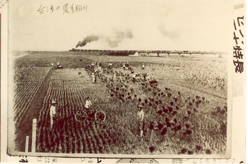 鹽水港製糖會社載運甘蔗的五分車,經過北斗一帶農田。約1938年拍攝。(草野峰一提供、衛城提供)