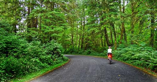 Forks Rain forest Washington Cascades 2014_0268