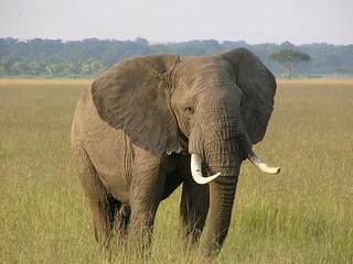 elephant01[1]