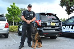 automobile, law enforcement, dog, vehicle, pet, police, official, police dog, police officer,