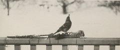 """Image from page 182 of """"The book of birds; common birds of town and country and American game birds"""" (1921)"""