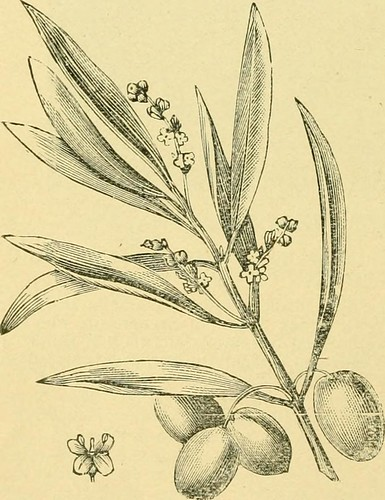 "Image from page 435 of ""The California fruits and how to grow them"" (1889)"
