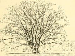 "Image from page 129 of ""Essex naturalist: being the journal of the Essex Field Club"" (1887)"