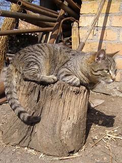 Cat on Log