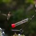 Hummingbird 8/20/14
