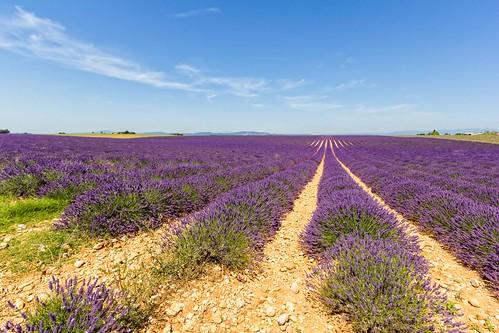 travel flowers blue summer sky france clouds europe day violet lavender hills fields provence 2014 lavandula valensole provencealpescôtedazur pwpartlycloudy pwsummer